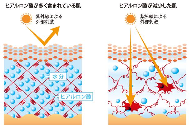 ヒアルロン酸イメージ