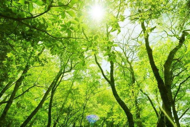 樹木の生命力の源