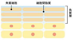 天然セラミドと保湿成分が肌の水分をしっかりキープ1