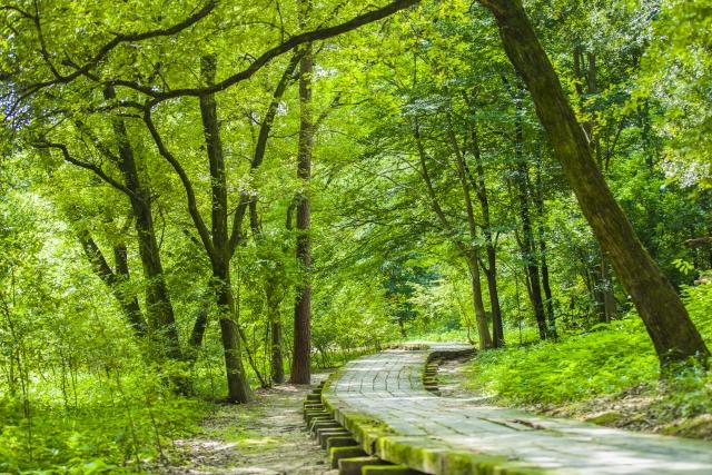 森林浴と美容効果