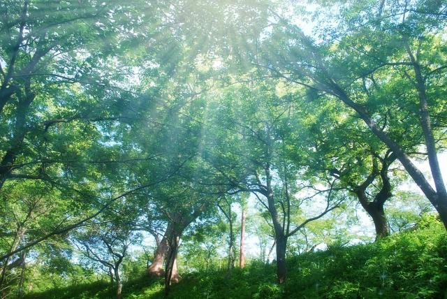 森林浴の医学効果<br>日本で構築されたエビデンス
